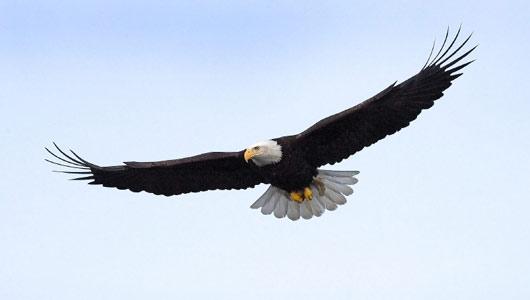 പ്രിയപ്പെട്ടവരെ,  നിങ്ങള് പരുന്തുകളെ (Eagles) ശ്രദ്ധിച്ചിട്ടുണ്ടോ?